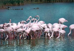 Riconoscimento Unesco per il Delta del Po