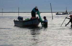 Proroga diritti esclusivi di pesca: il Presidente Trombini scherza con il fuoco e il destino di centinaia di famiglie