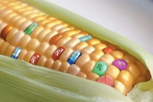 OGM IN POLESINE, CRIVELLARI INFORMA IL MINISTRO MARTINA